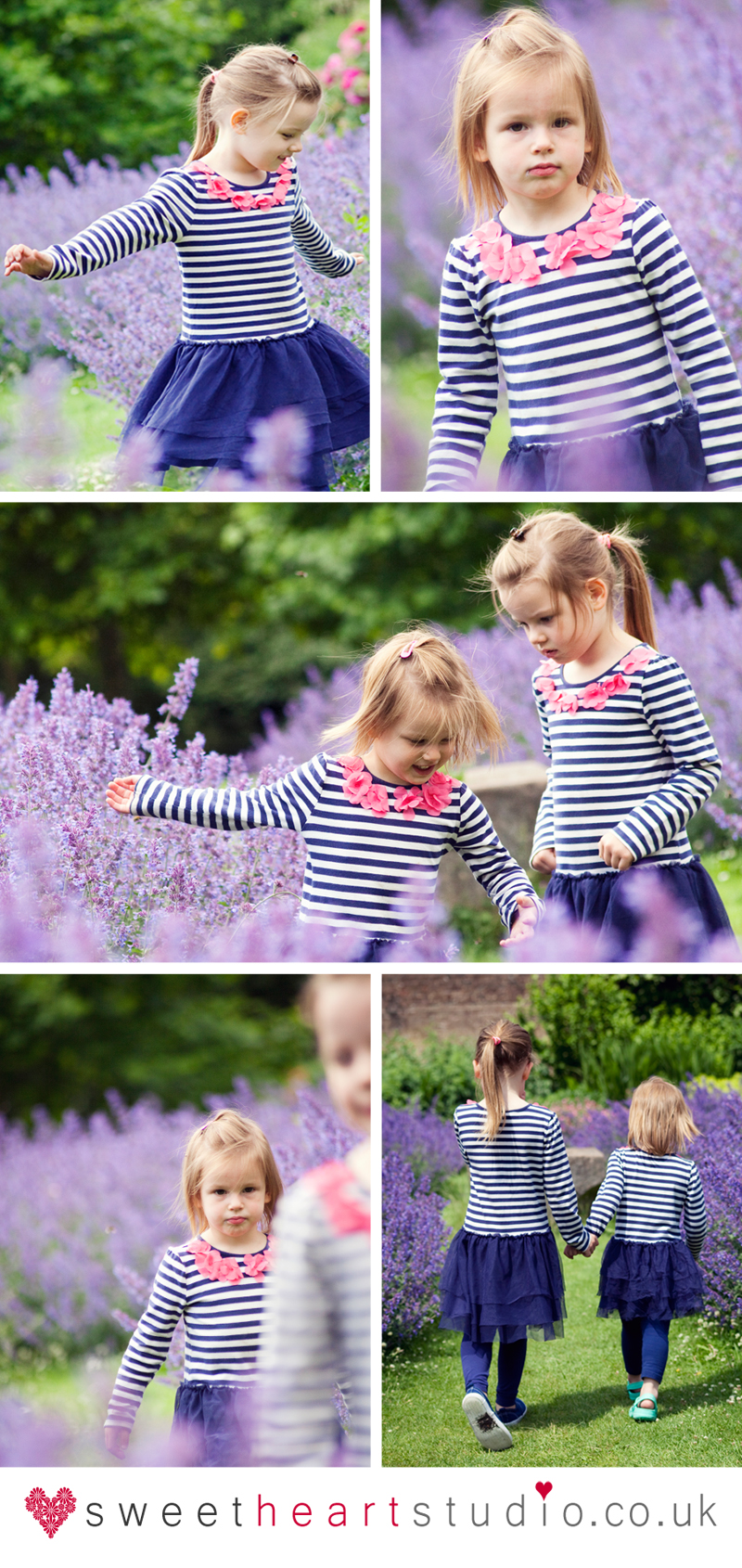 photo shoot in the lavender richmond