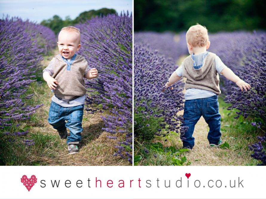 mayfield lavender mini session